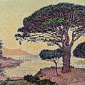 Umbrella Pines At Caroubiers by Paul Signac