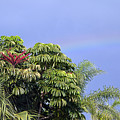 Umbrella Tree With Rainbow And Flower by Allan  Hughes