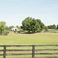 Unbridled Farm by Pamela Williams