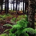 Under The Alaskan Trees by Lori Mahaffey