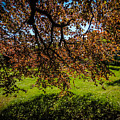 Under The Autograph Tree In County Galway's Coole Park by James Truett