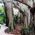 Under The Banyan Tree by Beth Williams