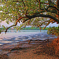 Under The Mangroves by HH Photography of Florida