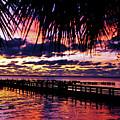 Under The Palms Sunrise by Davids Digits