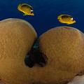 Under The Sea by Hagai Nativ