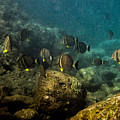 Under The Sea Scape by Doug Shanaman