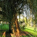Under The Weeping Willow by Cynthia Woods