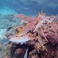 Under Water Fiji by Heather Fiedler