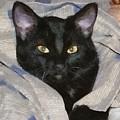 Undercover Kitten by Jeffrey Kolker