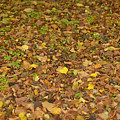Undergrowth, Leaves Carpet. by Adriano Bussi