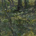 Undergrowth Saint Remy De Provence  July 1889 Vincent Van Gogh 1853  1890 by Artistic Panda