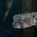 Undersea Happy Face by Susan Molnar