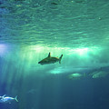 Undersea Scene Background by Benny Marty