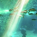 Underwater Background With Sunbeams by Benny Marty