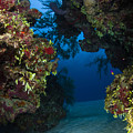 Underwater Crevice Through A Coral by Todd Winner