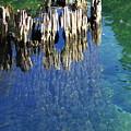 Underwater Cypress Stump by Carol Groenen
