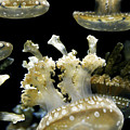 Underwater Life by Marilyn Hunt