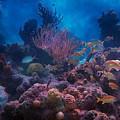 Underwater Paradise by Betsy Knapp