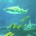 Underwater Shark Background by Benny Marty