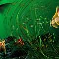 Underwater Wonderland  Diving The Reef Series. by David Lane