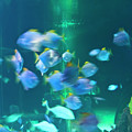 Underwater05 by Svetlana Sewell