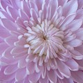 Unfolding Beauty by Ann Horn