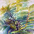 Unfurling Ferns by Kathy Sturr