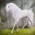Unicorn In The Forest by Solomon Barroa