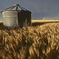 United States, Kansas Wheat Field by Keenpress
