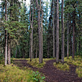 University Of Alaska Fairbanks Trail System by Cathy Mahnke