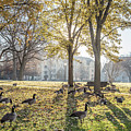 University Of Notre Dame Campus  by John McGraw
