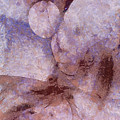 Unlampooned Fineness  Id 16099-043046-41250 by S Lurk