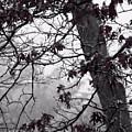 Until The Last Leaf Falls by Roxy Riou