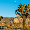 Untouched Joshua Tree National Park by Andre Distel