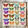 Colourful Butterflies Collage by Shabby Chic and Vintage Art