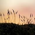 Unusual Sunset by Stefania Levi