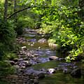 Up A Creek by Rebecca Raybon