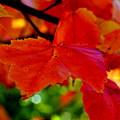 Up Close And Colorful by Kathleen Sartoris
