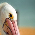 Up Close And Personal With My Pelican Friend by T Brian Jones