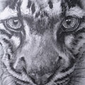 Up Close Clouded Leopard by Barbara Keith