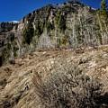 Up The Hill by Buck Buchanan