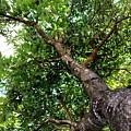 Up The Tree by Mesa Teresita
