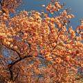 Up To The Cherry Flowers by Jelieta Walinski