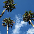 Up To The Sky Palms by Susanne Van Hulst
