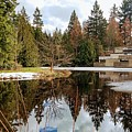 Upper Pond Reflections by Darrell MacIver