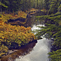 Upper Salamander Creek by Richard Rivard