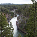 Upper Yellowstone Falls by Linda Kerkau