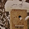 Upscale Bird Loft For Rent by Pixel Productions