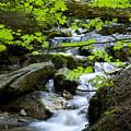 Upstream by Idaho Scenic Images Linda Lantzy