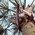Upward Palm by Mary Haber
